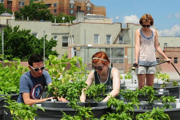 Manhattan college rooftop garden